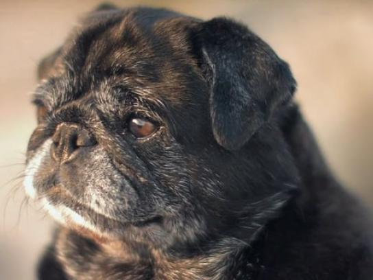 Organic Doggie Treats Digital Ad - Unsullied