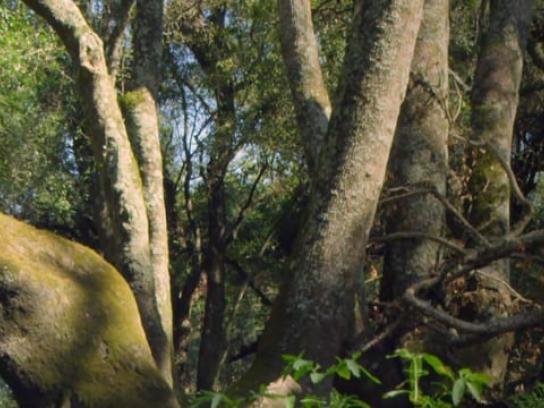 Fundación Banco de Bosques Digital Ad - Ecoalarm
