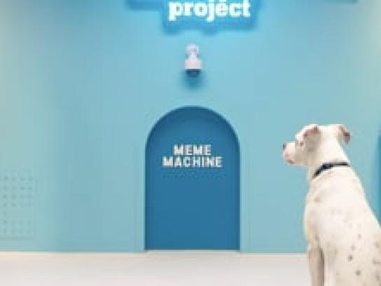 The Humane Society of the United States Digital Ad - The Shelter Pet Project