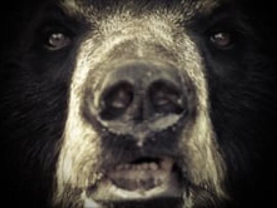 Four Paws Film Ad - The Bear Endurance - Test Demo