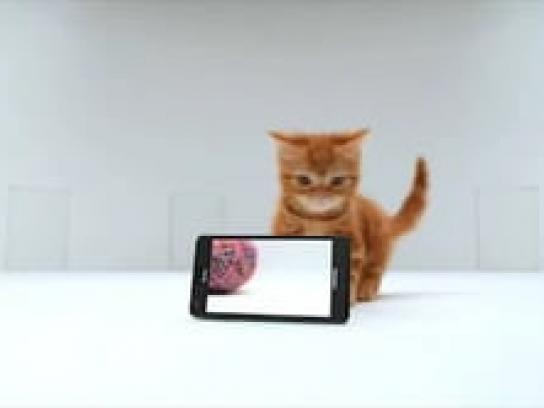 AT&T Film Ad -  Kitten