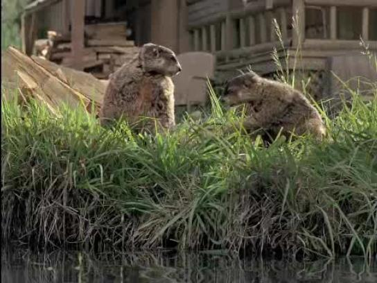 Geico Film Ad -  Woodchucks