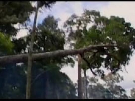 Solo Un Planeta Ambient Ad -  Deforestation