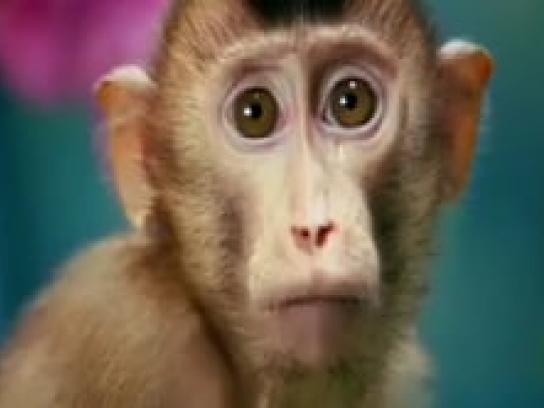 Gainomax Film Ad -  Cute monkey
