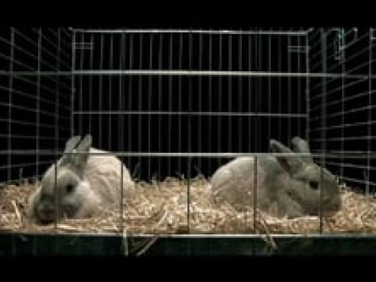 Roy Awards Film Ad -  Rabbits
