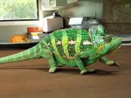 Ray-Ban Film Ad -  Chameleon