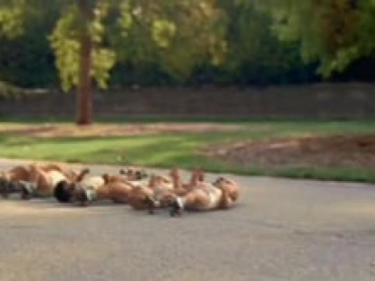Evian Film Ad -  Rollerbabies