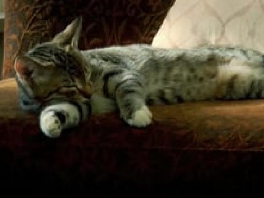 VTSF Film Ad -  Kitten