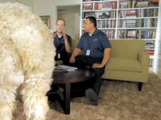 Stanley Steemer Film Ad -  Alpaca