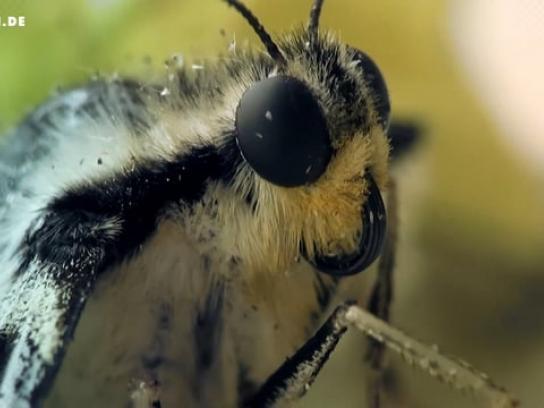 Thomann Film Ad - Butterfly
