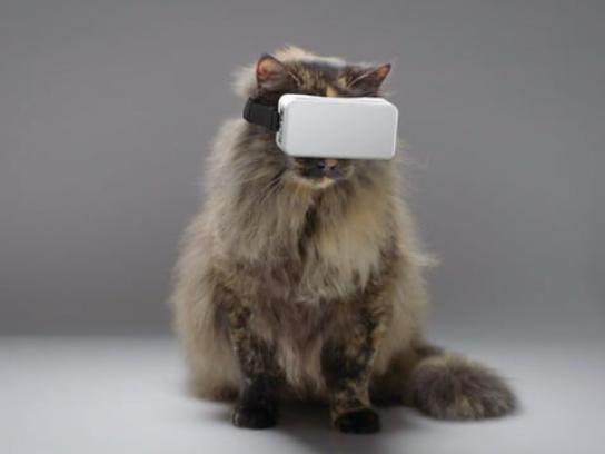 Zoos Victoria Film Ad - Cat VR