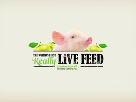 Compassion In World Farming Ambient Ad -  Live feed