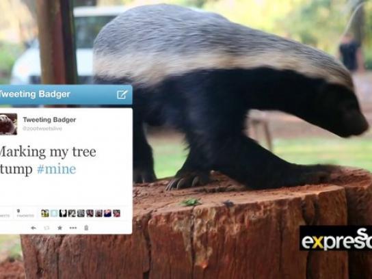 Johannesburg Zoo Ambient Ad -  BG