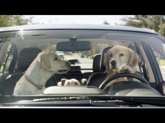 Subaru Film Ad -  In the Dog House