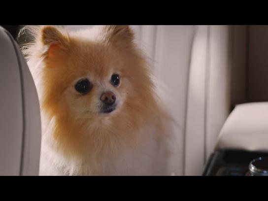 Genesis Film Ad - Driver versus Dog
