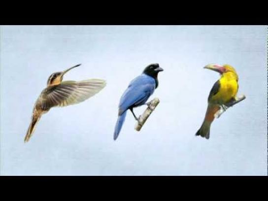 SaveBrasil Ambient Ad -  Birds