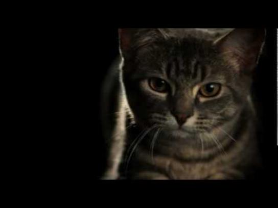 Whiskas Film Ad -  Pouncing