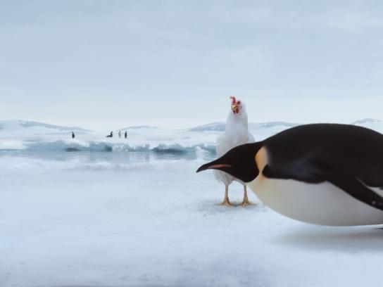 Sanderson Farms Film Ad - Penguins
