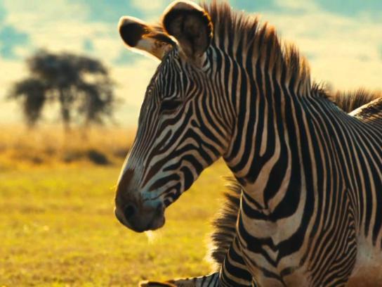 Columbus Zoo and Aquarium Film Ad -  Heart of Africa