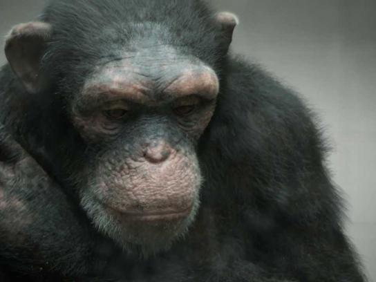 PETA Film Ad -  98% human