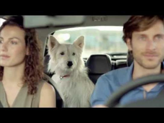 Citroën Film Ad -  Dog romance