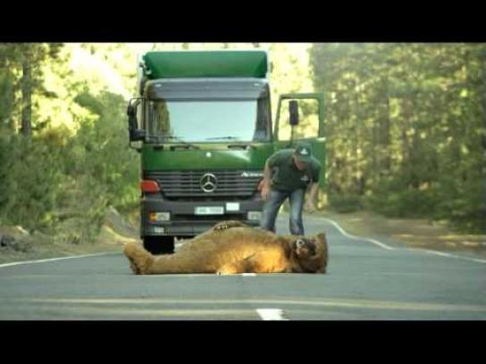 Lacplesis Film Ad -  Bears
