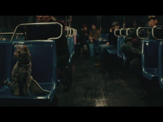 New York Lottery Film Ad - Bodega Cat