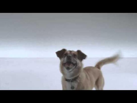 The Shelter Pet Project Film Ad -  Arnie