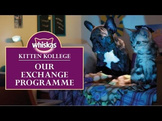 Whiskas Digital Ad -  Kitten College - Our exchange programme
