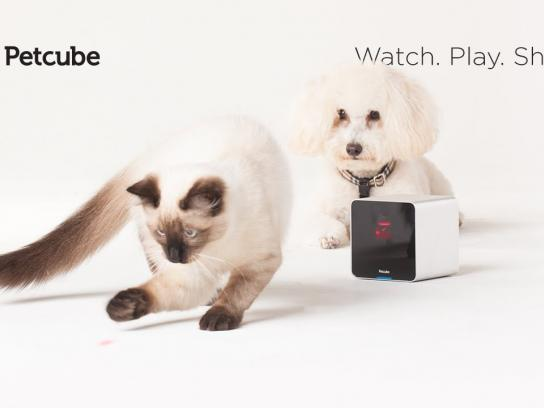 Petcube Digital Ad -  Stay connected to your pets