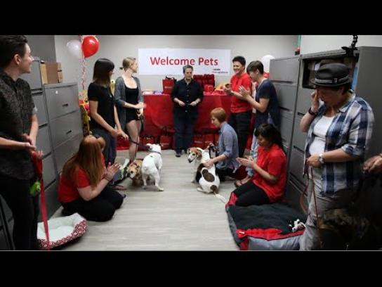 Purina Digital Ad -  #Petsatwork Makeover