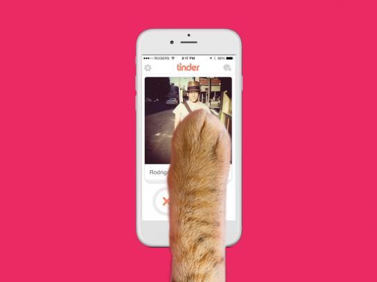 Vancouver Orphan Kitten Rescue Association Digital Ad -  Catfishing