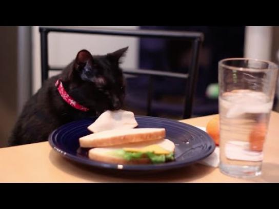 meowbox Film Ad -  Keep them busy