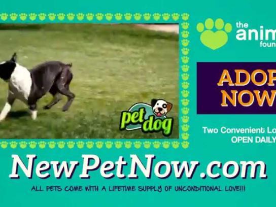 The Animal Foundation Film Ad -  Pet dog