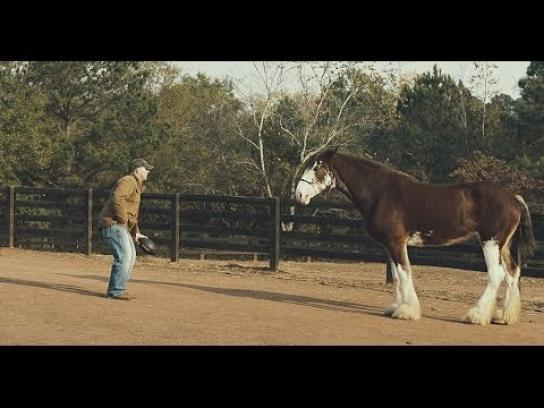 Synovus Film Ad - Just a Horse