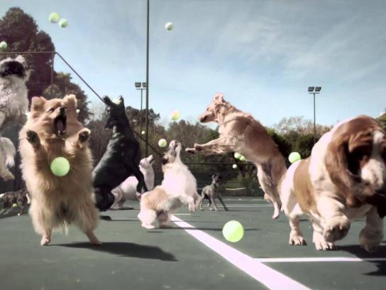 Jungle Energy Bar Film Ad -  Fetch