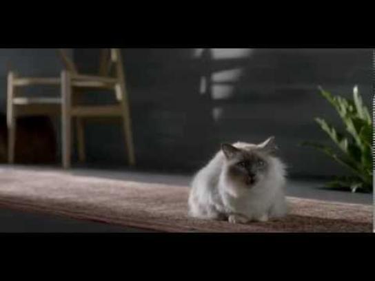 Cisco Film Ad -  Circle Story