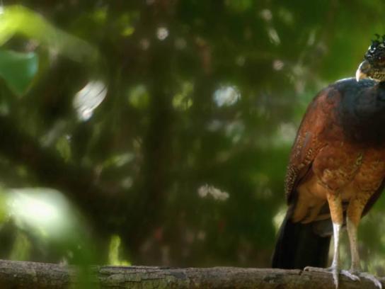 Belize Tourism Board Digital Ad - A curious place - Birds