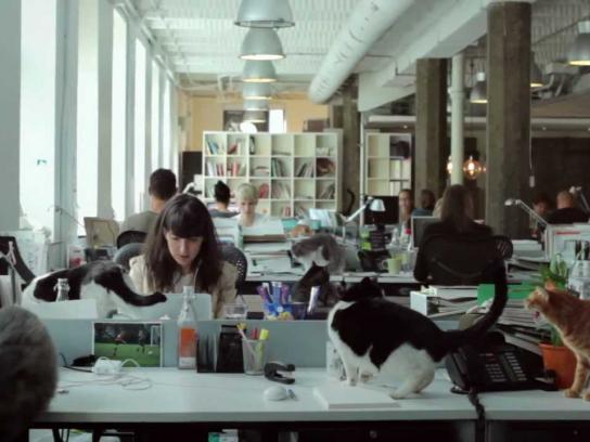 John St Digital Ad -  Catvertising