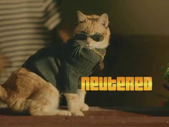 Ten Film Ad -  Scooter the Neutered Cat