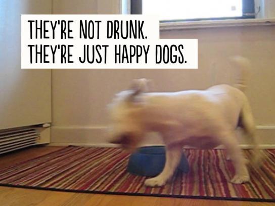 intuit Film Ad -  Happy dogs