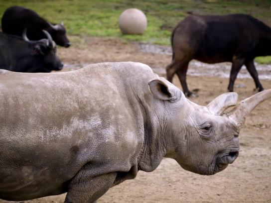 San Diego Zoo Global Wildlife Conservancy Film Ad - Let's Turn Things Around