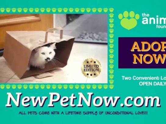 The Animal Foundation Film Ad -  Pet cat