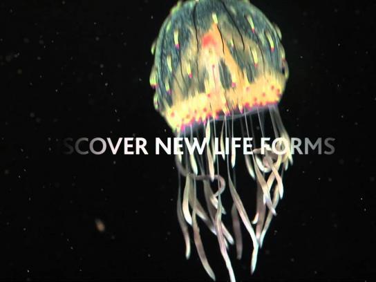 Vancouver Aquarium Film Ad -  Jellyfish Odyssey