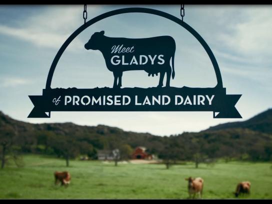 Promised Land Dairy Film Ad - Meet Gladys