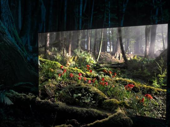 "Sony Film Ad - BRAVIA OLED TV - ""Window Into Daytime"""