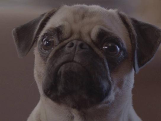 Special Dog Film Ad - Sofa