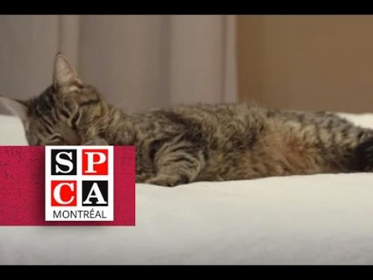 ASPCA Film Ad -  Sexy cat on the prowl for lovin'