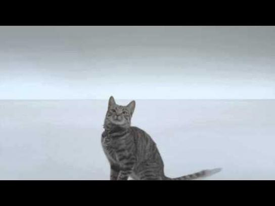 The Shelter Pet Project Film Ad -  Stetson