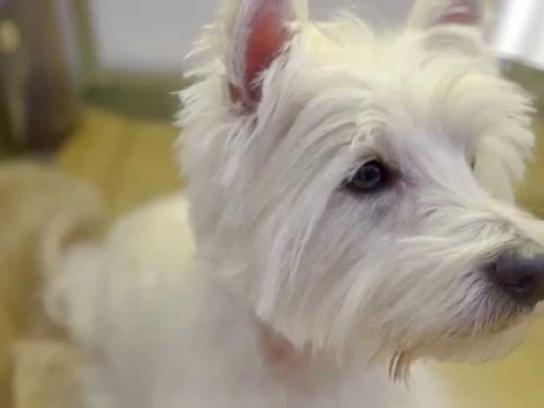 Humane Society International Film Ad -  Doggies